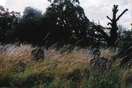 hierbajos